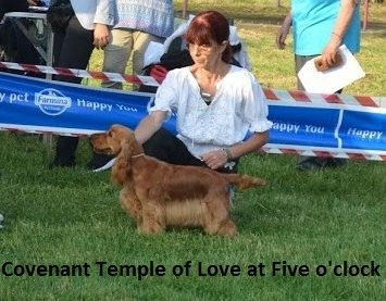 Best junior in show : COVENANT TEMPLE OF LOVE AT FIVE O'CLOCK